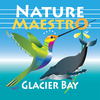 glacier bay itunes connect icon 1024